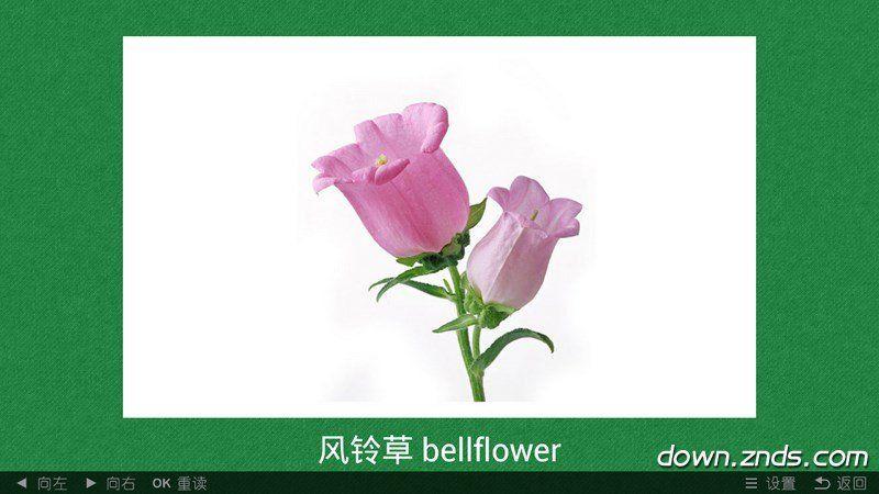 看图学植物TV版
