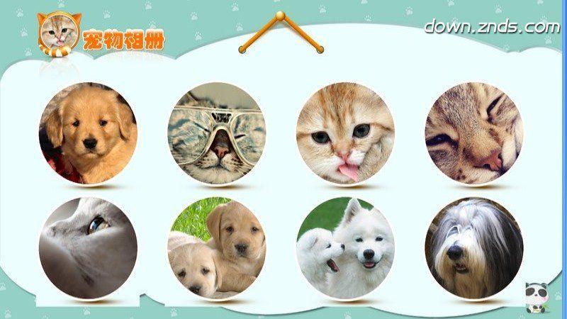 宠物相册TV版