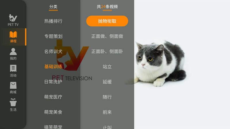 萌宠TVTV版